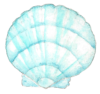 light blue shell