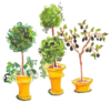 thin topiary trees